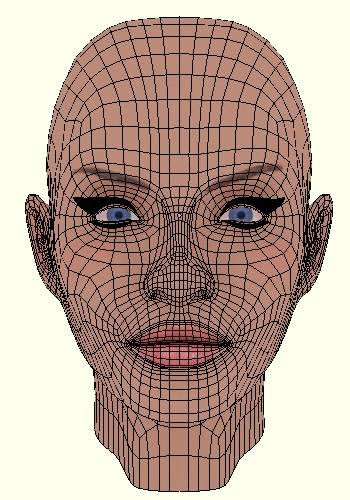 Face Wireframe