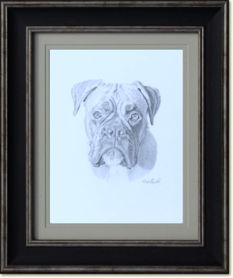 Boxer Dog - Pet Portrait