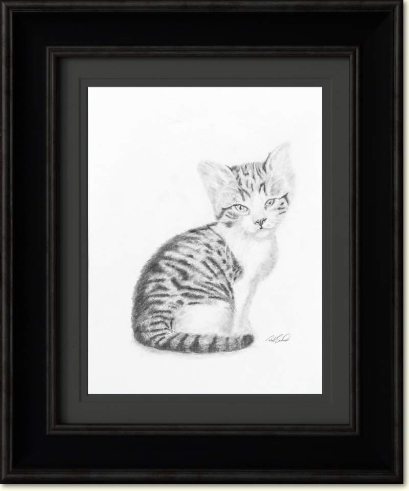 Kitten - Pet Portrait