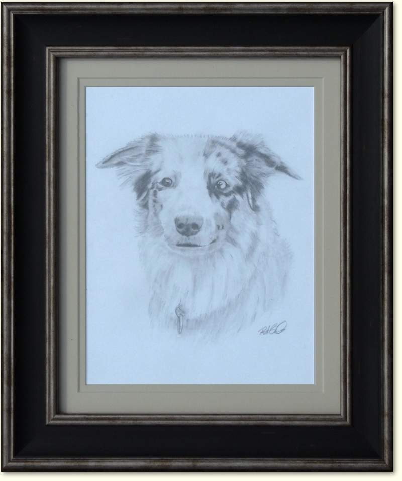 Pet Portrate  - My Border Collie Saffy