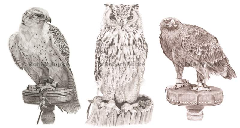 Eurasian Eagle Owl with Gyralcon and Eagle